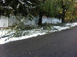 broken-tree-limbs-storm