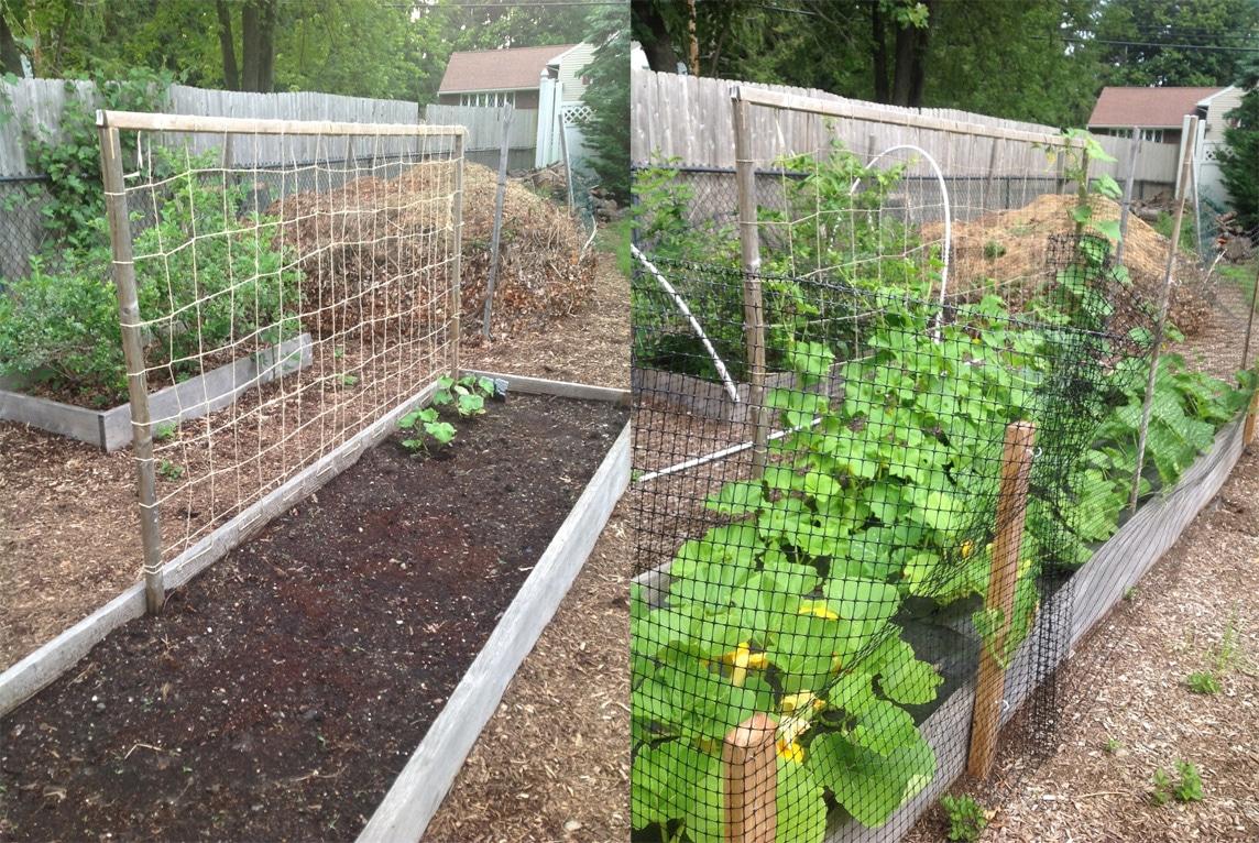 Garden Update Goodstuffathome